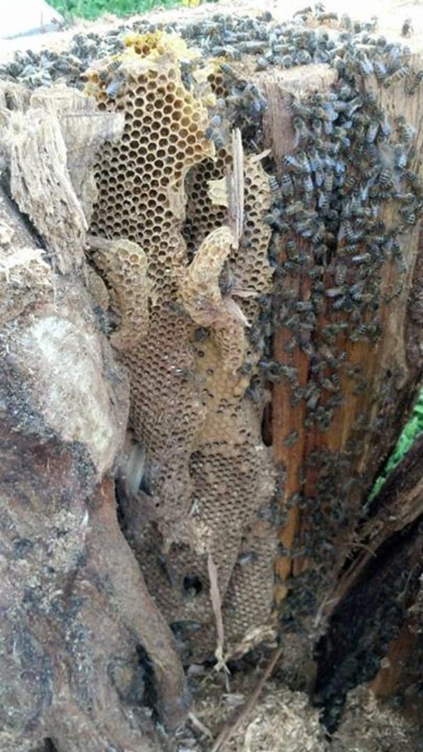 Upcoming Beginner Beekeeping Workshop Series