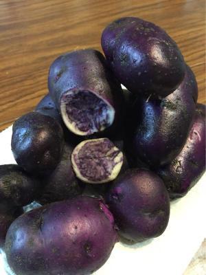Conforti-Farms-River-John-Blue-Potatoes