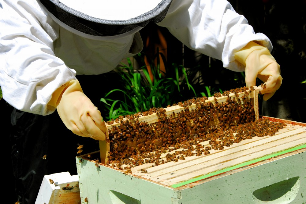 Free Lunch & Learn August 19: Beekeeping with Michelle Wright