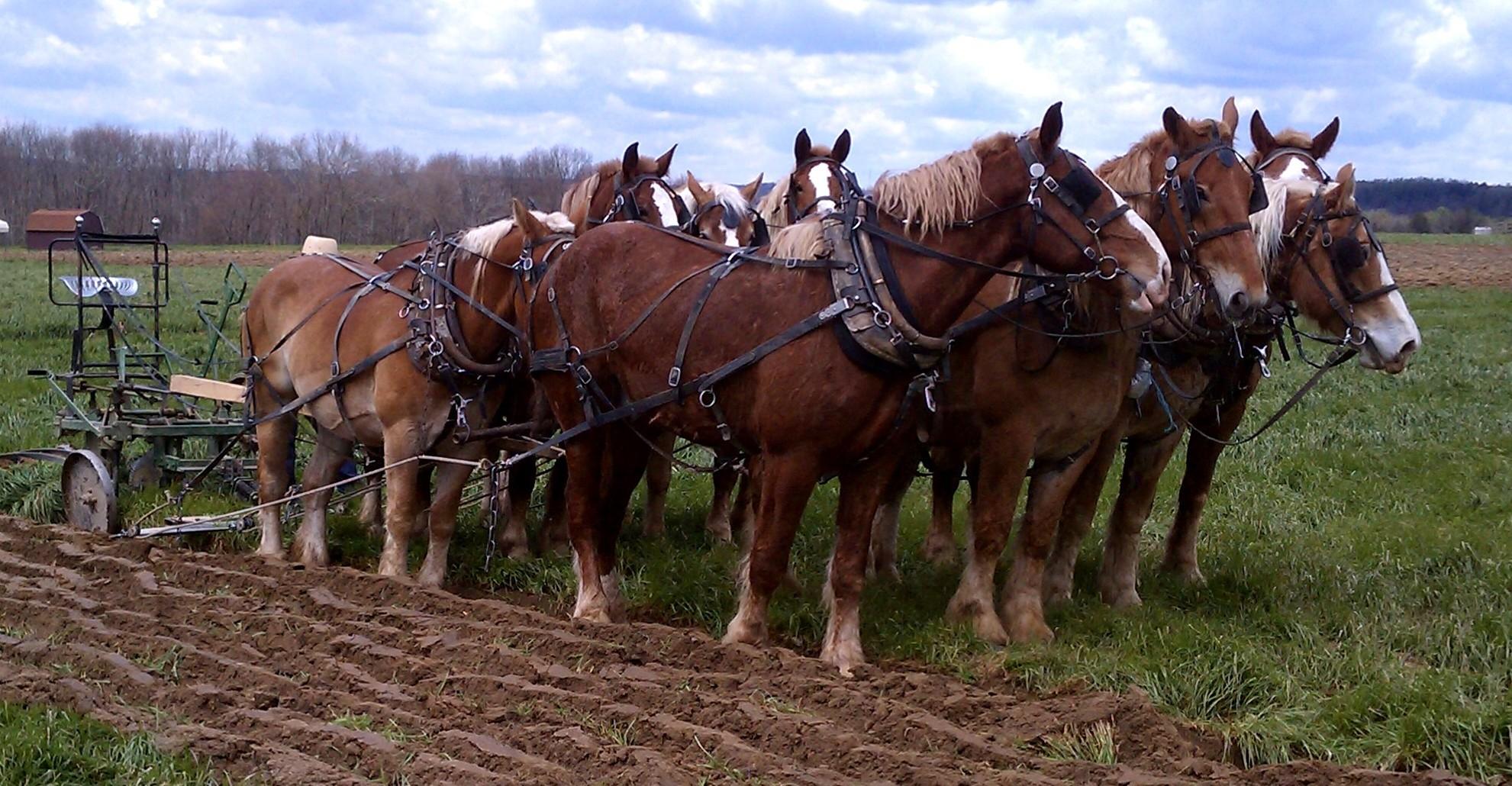 Our horsepower!