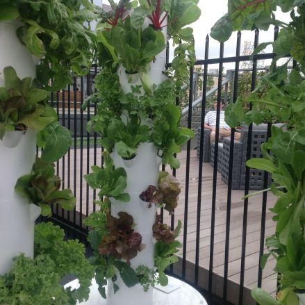 Farm Urbana 2014 - Ruth Meghiddo