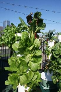 Urban Farm Design