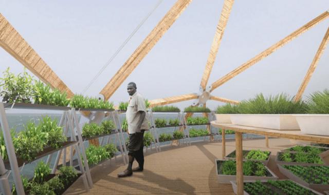 bamboo dome concept