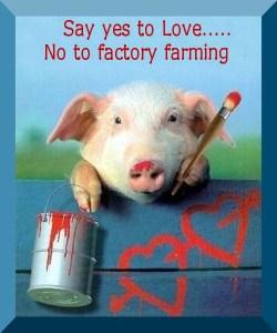 no-to-factory-farms