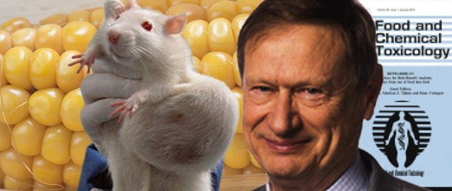 corn-fed-tumour-rat-A-Wallace-Hayes-710px