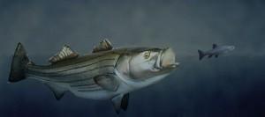 Delta bass predation