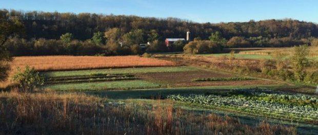 Wisconsin Organic Vegetable Farm