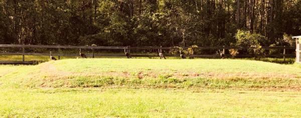 Finding encouragement from a boy and six turkeys on farmwyfe.com