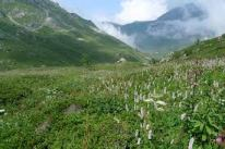 Alpine grassland in summer