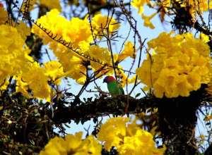 Observação de aves no Parque São Francisco (Marcelo Martins - PMB)