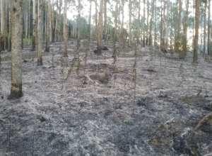 Área afetada por incêndio em Benedito Novo (CBM)