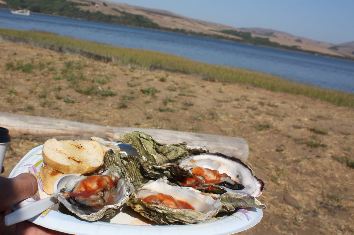 bbqoysters