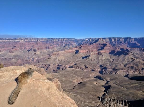 Grand Canyon squirel