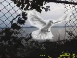 ترانه آزادی یعنی….اثری بسیار زیبا از هنرمند آزادیخواه سیا30