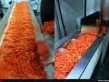 تولید پفک از خوراک دام