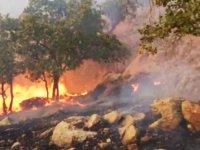 آتش  سوزی جنگل های کوه حاتم در استان کهگیلویه و بویر احمد همچنان ادامه دارد