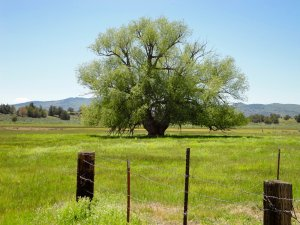 The Spanish Springs Ranch has excellent hunting opportunities which provide for an additional highest and best use.