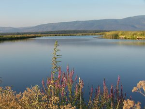 The Island Ranch attracts thousands of migratory waterfowl and features larger game.