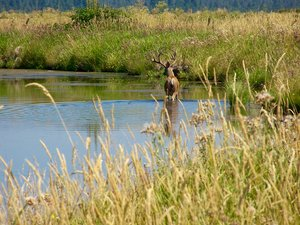 The Island Ranch has 65 acres is in hay production, 500 acres in irrigated pasture and approximately 400 acres in water fowl habitat with outstanding duck hunting and larger game hunting!