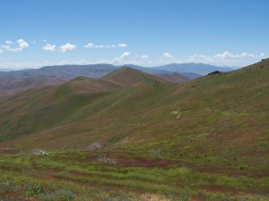 Buena Vista Valley has higher quality bulk land and is located close to I-80 at Mill City, NV.