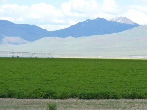 Buckskin Farms Ranch an income producing hay farm about 3 hours from Reno NV.