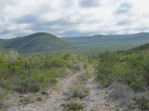 Mexico Hunting Ranch has been lightly grazed since 2009 and is a functioning cattle dip station with corrals.