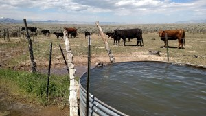 Upland range land & springs, stockwater permits and rights to springs, creeks, and ponds.