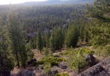 Oregon Forest Land Ranch