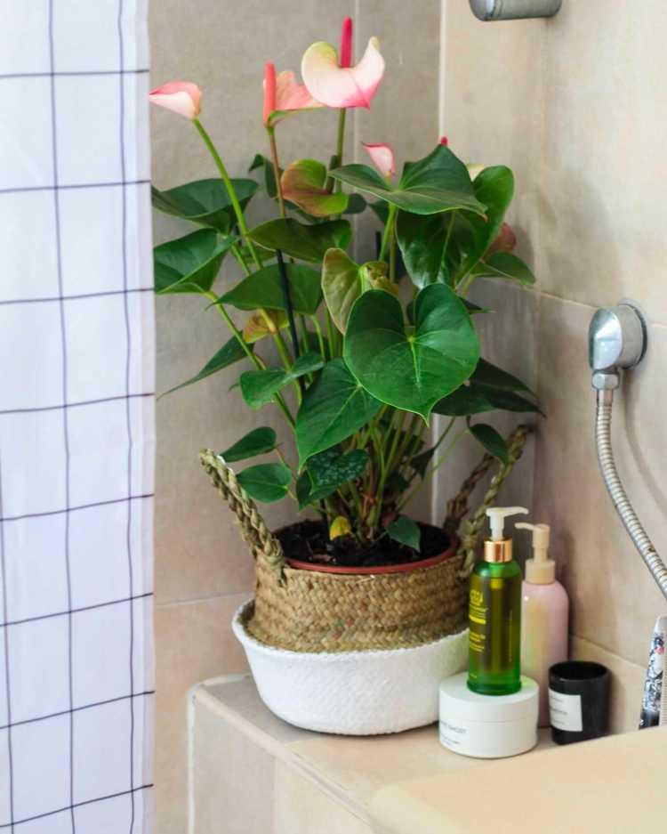 סיור היכרות עם הצמחים שלי Fashion Tails Luba Shraga