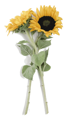 Gift of Flowers Image