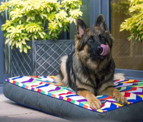 Designer dog bed mattress image