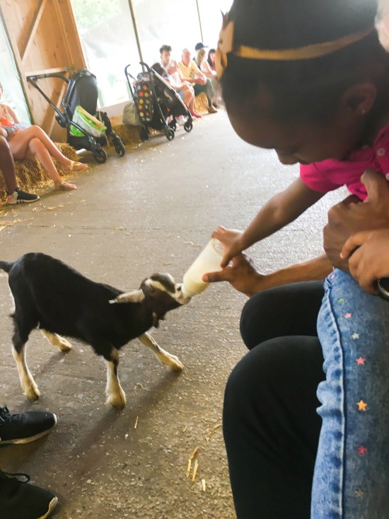 Farm Animals Image