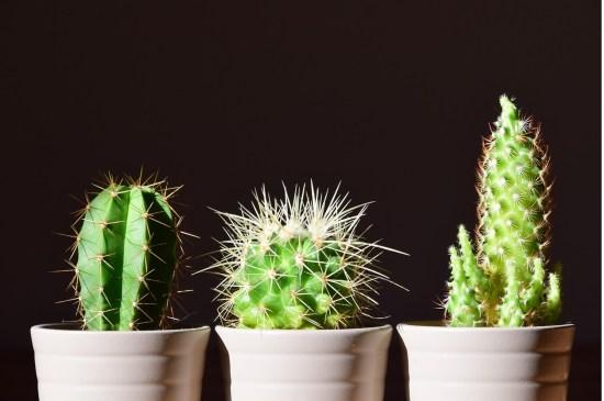 Indoor plants image
