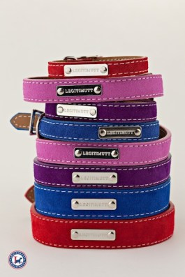Legitimutt collars in BOLD colors for the doggies FashionDailyMag loves