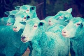 cyan sheep GRAY MALIN dream series FashionDailyMag