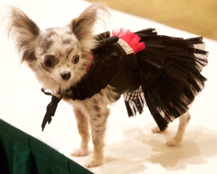Pet Fashion Week 17 FW Fashiondailymag PaulMorejon 1