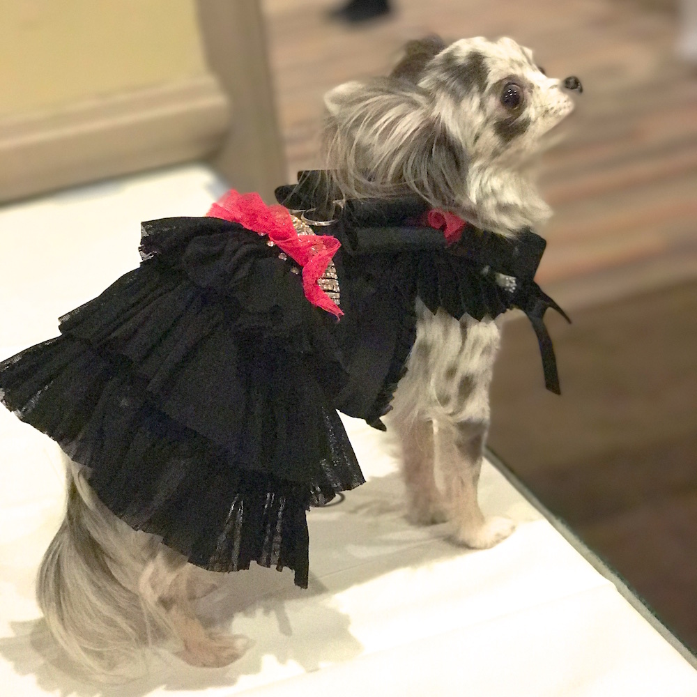 Pet Fashion Week 17 FW Fashiondailymag PaulMorejon 12