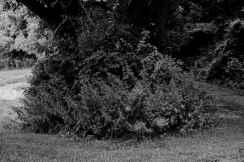 THE GRASS IS GREENER editoral YOUNG CREATORS PROJECT VOL 5 jw ellington x brigitte segura 4-7