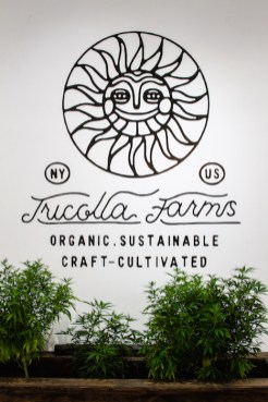 TONIC CBD TRICOLLA FARMS fashion daily mag brigitteseguracurator 123