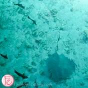 conrad maldives manta rays