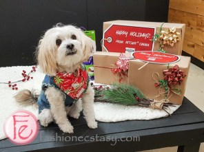 Jingle Woof PetSafe gift guide