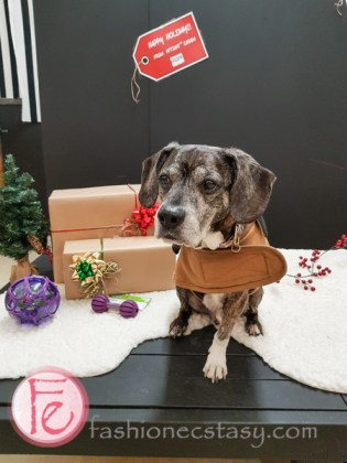 Jingle Woof PetSafe Canada's Holiday Party and gift guide at Unleashed in the City