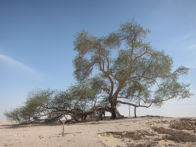巴林「生命之樹」/ Tree of Life, Bahrain