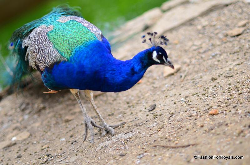 Costwold-Wildlife-Park (12)