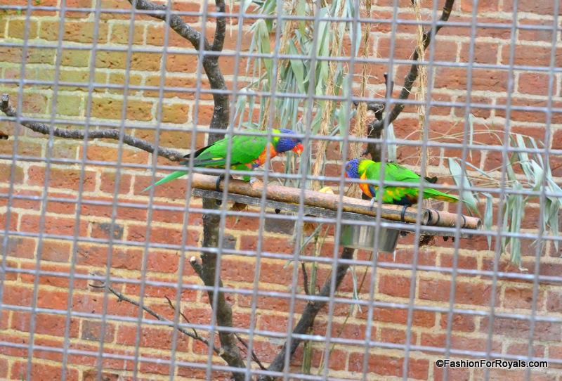 Costwold-Wildlife-Park (8)