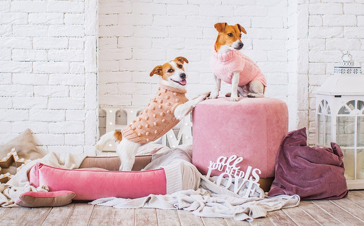 dressing-your-dog-in-the-latest-fashion