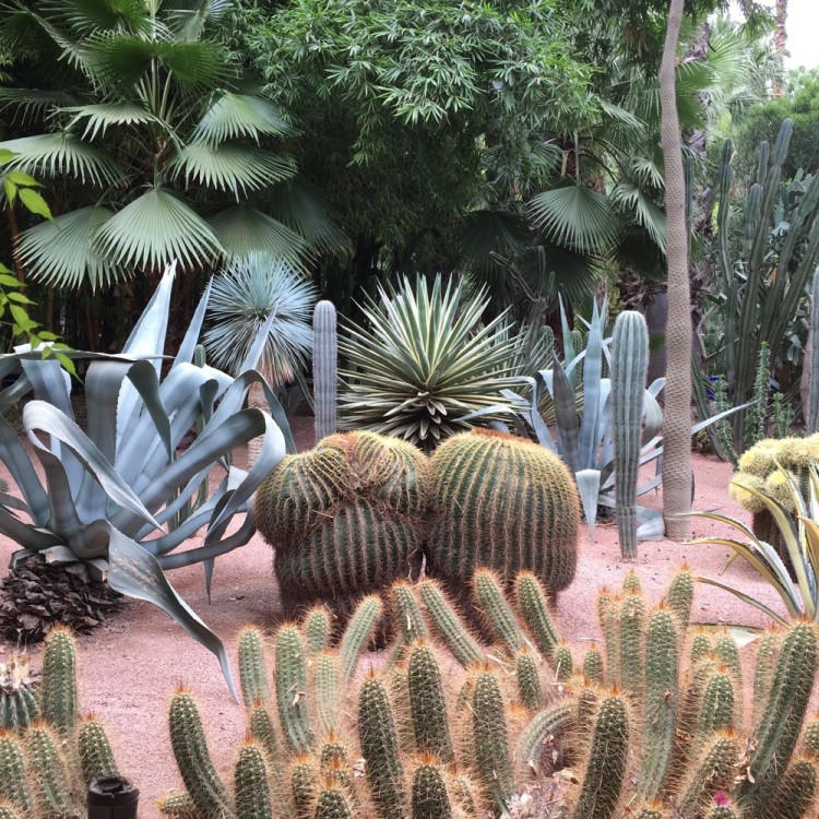 jardin majorelle travel