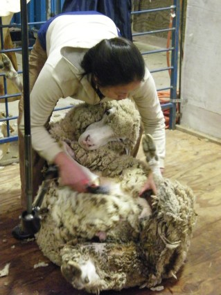 My friend Kim and I at shearing school.