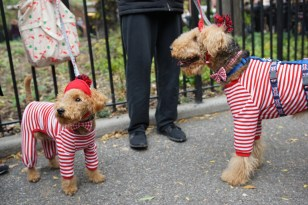 HALLOWEEN DOG PARADE: 25 YEARS IN TOMPKINS SQUARE PARK