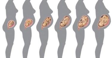 مراحل تكوين الجنين شهر بشهر